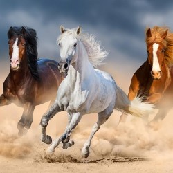 Konie - Nowoczesny obraz na płótnie