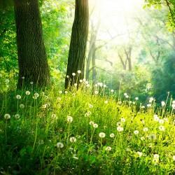 Wiosenny las - Nowoczesny obraz drukowany na płótnie