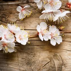 Wiosenne kwiaty - Nowoczesny obraz drukowany na płótnie