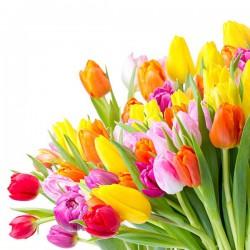 Kolorowe tulipany - Nowoczesny obraz drukowany na płótnie
